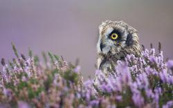 Owl Bird Field Flowers