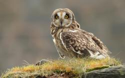 Owl Bird Grass Nature HD Wallpaper