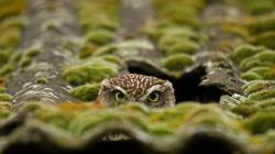 Owl Bird Roof