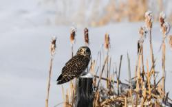 Owl Bird Winter Snow Tree Stump Plants