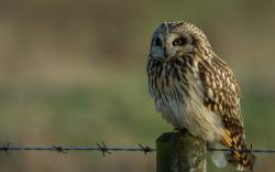 Owl Bird Wire