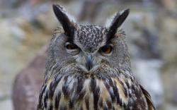 Owl suspicious