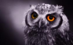 owl-wallpaper-09.jpg ...