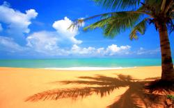 Palm Tree Beach Background The Best Wallpaper and Backgrounds