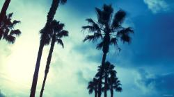 Palm Trees Background Wallpaper