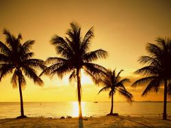 Palm Trees Wallpaper in Sunset
