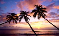 Beach Sunset Palm Tree Tumblr Pictures 5 HD Wallpapers