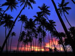 Free Palm Tree Wallpaper