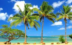 Tags: palm, tree, wallpaper