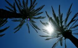 Palms sunshine