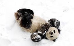 Panda snow fun