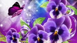 Purple Perfect Pansies wallpaper