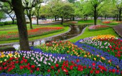 Flowers in Park Wallpaper