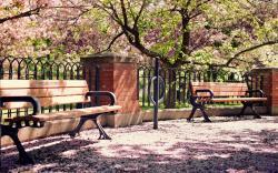 Park spring blossom