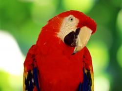 Parrots Pictures