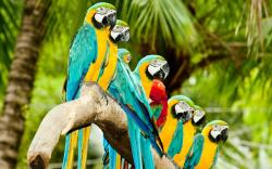 Parrots on branch