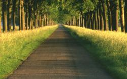 Path Backgrounds 13077