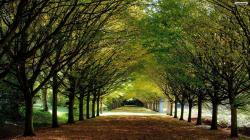 Green Path Wallpaper