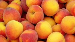 Fruit Peach Wallpaper 20689