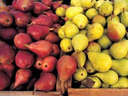 Desktop backgrounds · Animal Life · Nature Pears