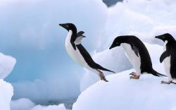 original wallpaper download: Penguin jump - 1920x1200