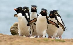 HD Wallpaper | Background ID:93650. 1680x1050 Animal Penguin