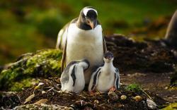 Penguins Birds Nest