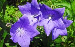 Perennial Flowers 14074 1920x1200 px