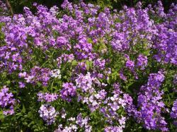 Perennial Flowers 14084 1600x1200 px