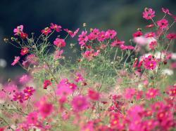 Perennial Flowers 14076 1024x768 px