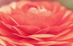 Petals Close-Up Flower