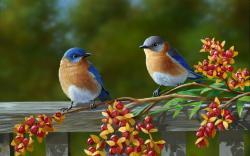 Pictures of Birds · Birds ...