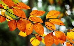 Leaves Orange Yellow Branch Tree Fall Autumn Nature