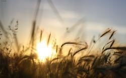 Terrific Scenery Sunset in Big Field Romantic Moment Photography Wallpaper