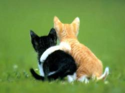 Cute Animals Photos Hd Cool 8 HD Wallpapers