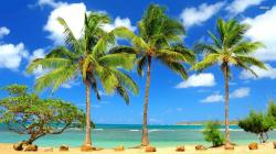Palm Trees 21 HD Images Wallpapers