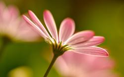 Pink blurred flower