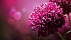 Beautiful Pink Flower Wallpaper #4859 Full HD 2560x2560 Resolution ... | Pink Flowers | Pinterest