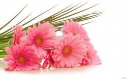 Pink Flower Wallpaper Cool Wallulungcom