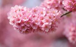 Beautiful pink flowers HQ WALLPAPER - (#132427)