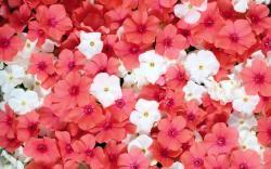 Bright Pink Flowers Wallpaper