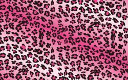 Amusing Pink Leopard Print Desktop Wallpaper Xpx