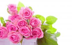 Magnificent pink roses in a white box