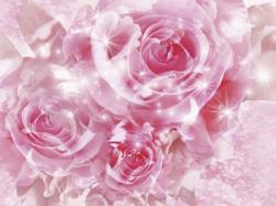 Special Pink Roses Wallpaper Background 1024x768px