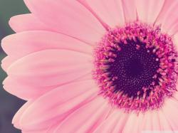 flower vintage hipster pink-wallpaper - Wide Wallpapers Community - WideWallpapers.co