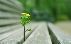 Plant Between Bench