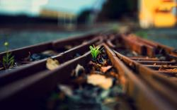 Plant railway rails