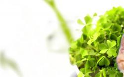 Green Plant Wallpaper