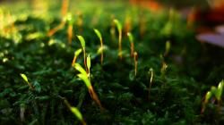Plants Close Up