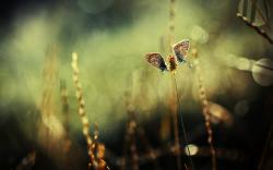 Plants Grass Butterflies Two